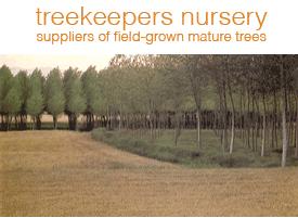 Treekeepers Nursery - suppliers of field-grown mature trees
